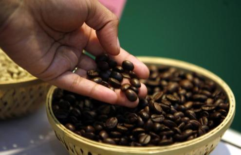 A visitor checks coffee beans at the 'International Coffee Festival 2007' in the southern Indian city of Bangalore February 24, 2007. The three-day long coffee festival has around 100 delegates from fifteen countries. REUTERS/Jagadeesh Nv (INDIA) - GM1DURKAPCAA